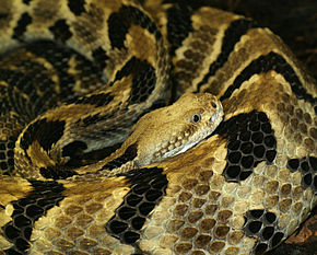voice_over_chasseurs_reptiles