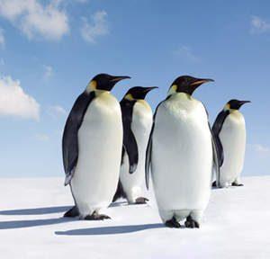voix_off_antarctique_croisiere_au_pays_des_manchots